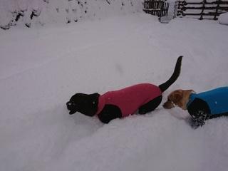 あん雪 123.jpg