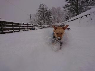 あん雪 131.jpg