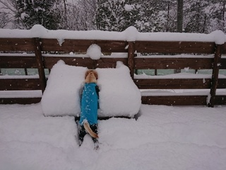 あん雪 136.jpg