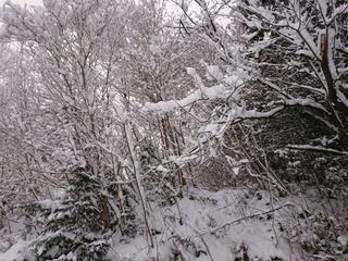 あん雪 176.jpg